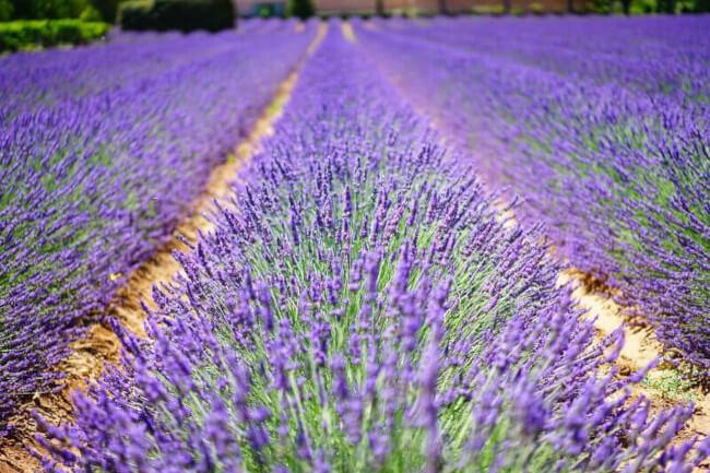 Calissons kommen aus der schönen Provence