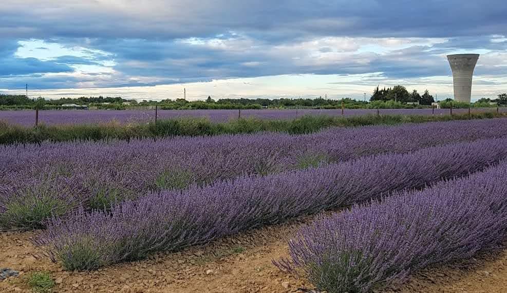 Französische Nachspeisen - Calissons kommen aus der schönen Provence, die bekannt ist für Ihre Lavendelfelder